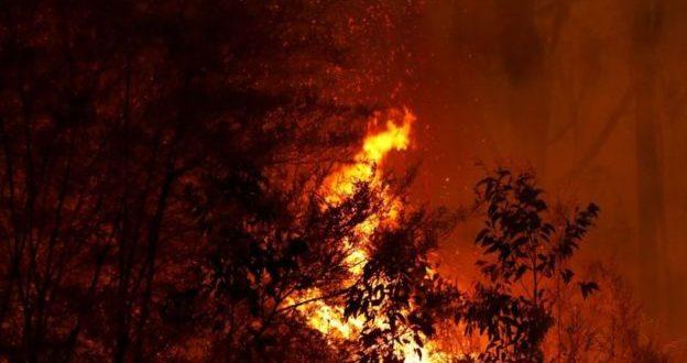 """بالصور .. الحرائق في الغابات الإسترالية..الخسائر من الحيوانات البرية في حريق الغابة و وفقا لدراسة استقصائية، نفوق قرابة """"500 مليون حيوان"""" في أسترليا منذ سبتمبر/ أيلول الماضي 2019م..- مشاركة:Pavel Kashaev"""