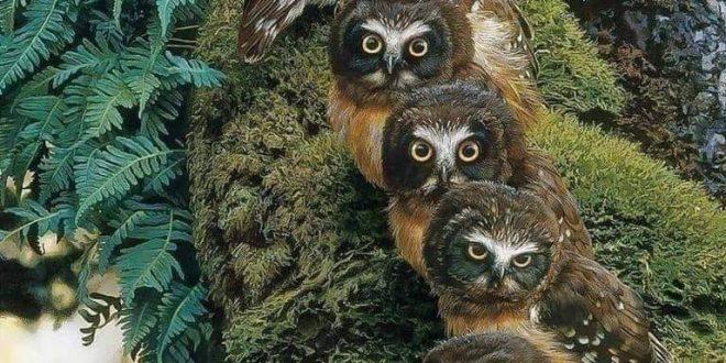 نقدم لكم مجموعة صور عن البوم البني والرمادي Gray Owl Coffee – مشاركة:Василий Петрикович
