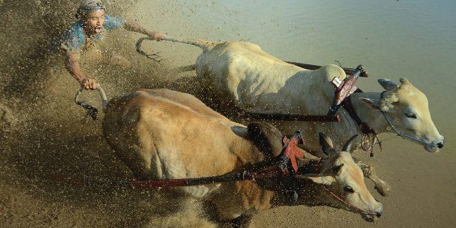 أخبار جائزة (هيبا) جائزة حمدان للتصوير..عن الماء..في الدورة التاسعة للعامين – 2019م-2020م..