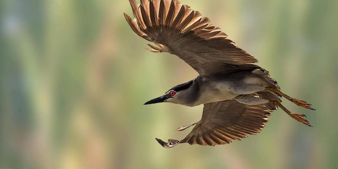 المصور المبدع #محمد_ إسماعيل  Mohamed Ismail..يرفع راية التحدي في مجال تصوير الطيور.. مع مجموعة من المصورين ..