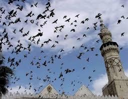 تحت سماء دمشق - قصة حمائم المسجد الأموي في دمشق .. في...   Facebook